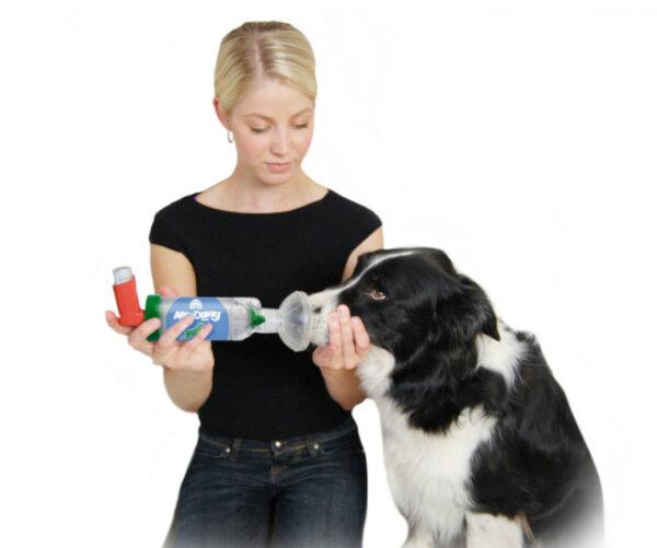 Frau nutzt AeroDawg* für Hunde an Ihrem kranken Hund