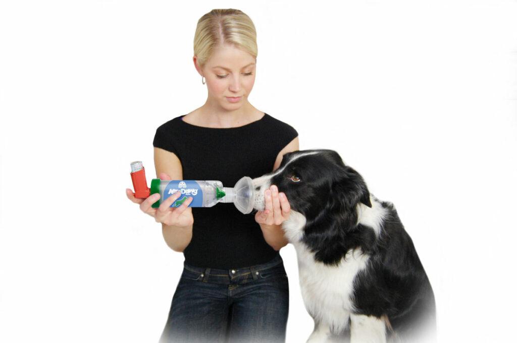 Frau nutzt AeroDawg* für Hunde an Ihrem Hund