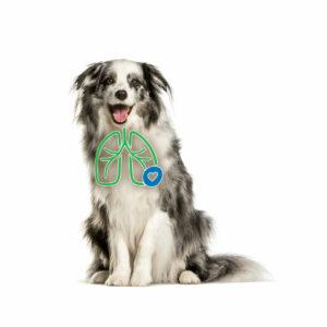 AeroDawg für Hunde - Bei chronischer Bronchitis