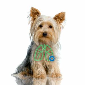 AeroDawg für Hunde - Bei chronischer Bronchitis (kleiner Hund)