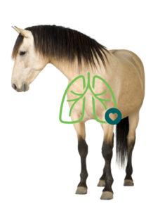 AeroHippus für Pferde - Bei Entzündlichen Atemwegserkrankungen