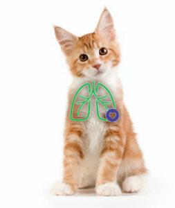 AeroKat für Katzen - Bei Asthmasymptomen